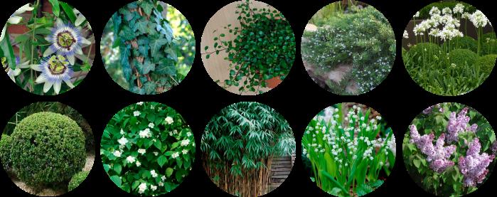 Terraza mimi plantas.png