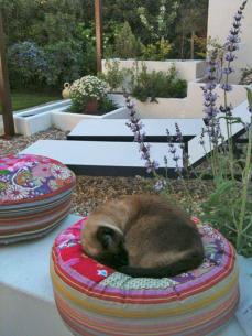 Jardín en Santa Ana en primavera
