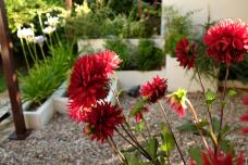 Jardín en Santa Ana en verano